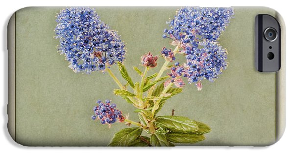 Nectar iPhone Cases - Californian Lilac iPhone Case by John Edwards