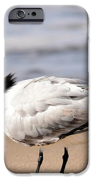 Call Of The Tern iPhone Case by Fraida Gutovich