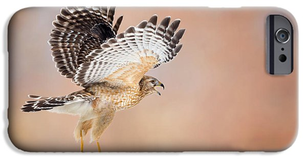 Spirit Hawk iPhone Cases - Call Of The Wild iPhone Case by Bill Wakeley