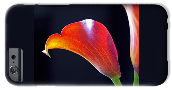 Calla Lilly iPhone Cases - Calla Colors and Curves iPhone Case by Rona Black