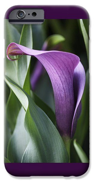 Lilac iPhone Cases - Calla Lily in Purple Ombre iPhone Case by Rona Black