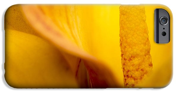 Close Up iPhone Cases - Calla Lily iPhone Case by Sebastian Musial
