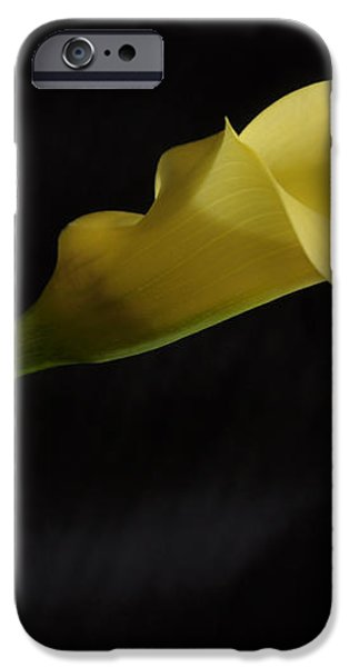 Calla Lily Yellow II iPhone Case by Ron White