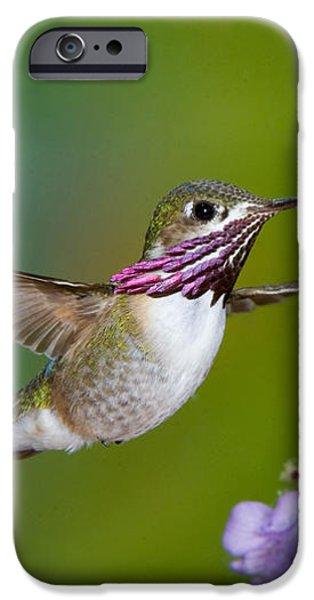 Calliope Hummingbird iPhone Case by Anthony Mercieca