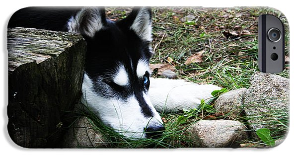 Huskies Digital Art iPhone Cases - Calm and Comfy iPhone Case by Jamie Lynn