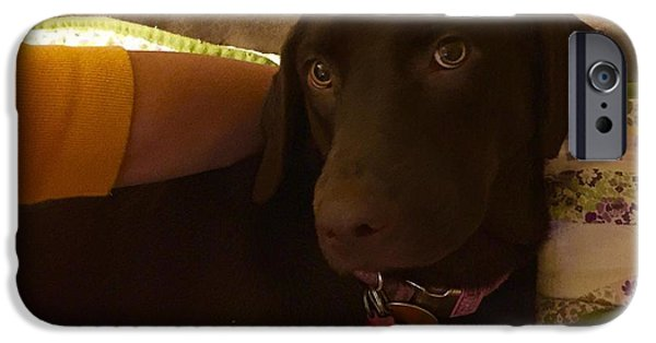 Chocolate Lab Mixed Media iPhone Cases - Calm Before the Storm iPhone Case by David Munsell