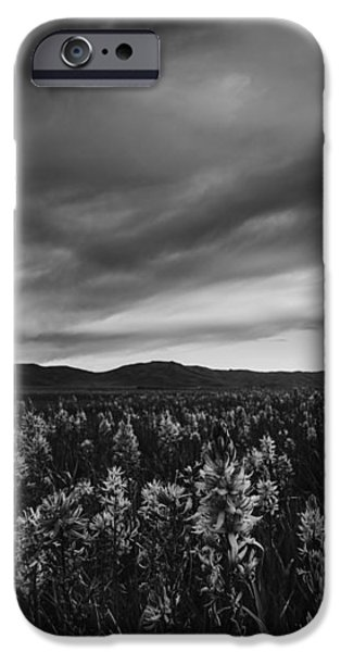 Overcast Day iPhone Cases - Camas Lilies in monochrome iPhone Case by Vishwanath Bhat