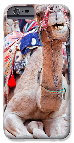 Jordan iPhone Cases - Camel of Petra iPhone Case by Alexey Stiop
