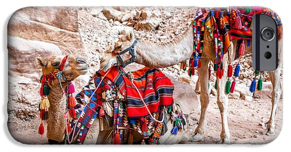 Jordan iPhone Cases - Camel tenderness iPhone Case by Alexey Stiop