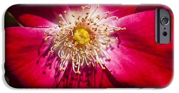 Camellia iPhone Cases - Camellia iPhone Case by Carolyn Marshall