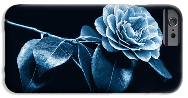 Camellia iPhone Cases - Camellia Flower Midnight Blue iPhone Case by Jennie Marie Schell