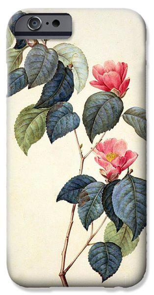 Flora Drawings iPhone Cases - Camellia Japonica iPhone Case by Pierre Joseph Redoute