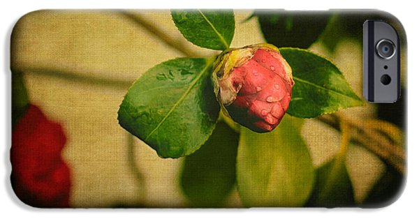 Camellia iPhone Cases - Camellia iPhone Case by Marco Oliveira
