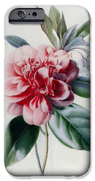 Camellia iPhone Cases - Camellia iPhone Case by Marie-Anne