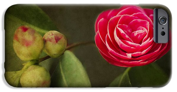 Camellia iPhone Cases - Camellia iPhone Case by Rebecca Cozart
