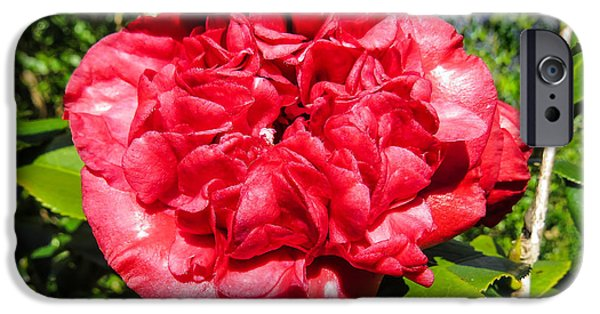 Recently Sold -  - Plant iPhone Cases - Camellia sasanqua iPhone Case by Zina Stromberg