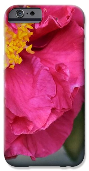 Camellia with Bee iPhone Case by Carol Groenen