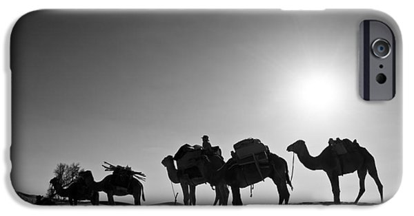 Camel Photographs iPhone Cases - Camels iPhone Case by Delphimages Photo Creations