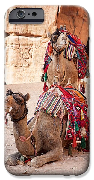 Camels in Petra iPhone Case by Jane Rix