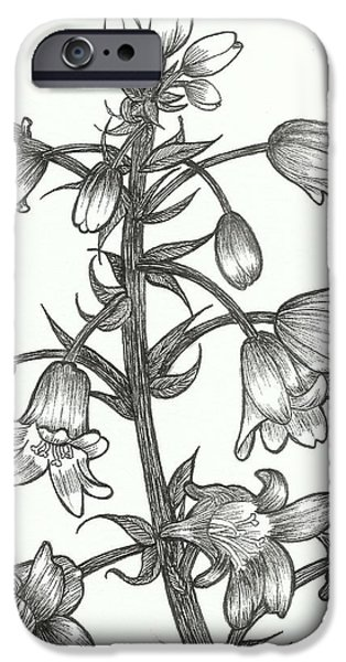 Flora Drawings iPhone Cases - Campanulaceae iPhone Case by Margaretha Yvs Mynk