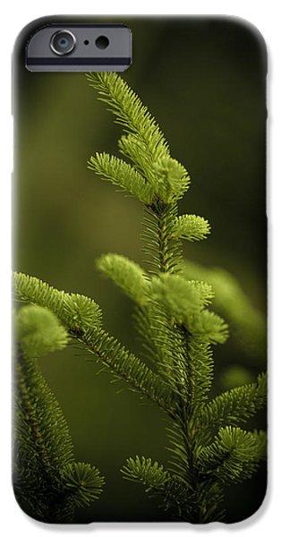 Fir Trees iPhone Cases - Canaan Fir iPhone Case by Shane Holsclaw