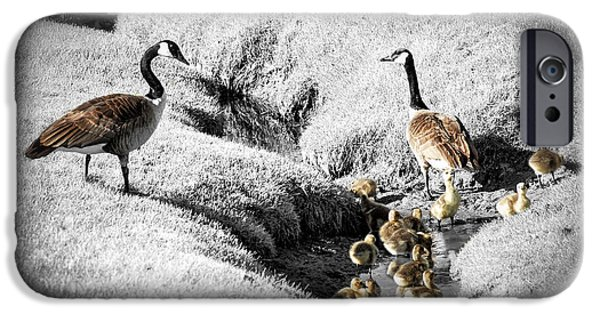 Fowl iPhone Cases - Canada geese family iPhone Case by Elena Elisseeva