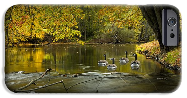 Birds iPhone Cases - Canada Geese in Autumn swimming on the Thornapple River iPhone Case by Randall Nyhof