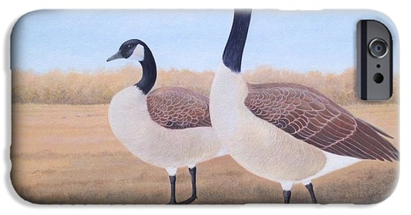 Canadian Geese Paintings iPhone Cases - Canada Goose  iPhone Case by Alan Suliber
