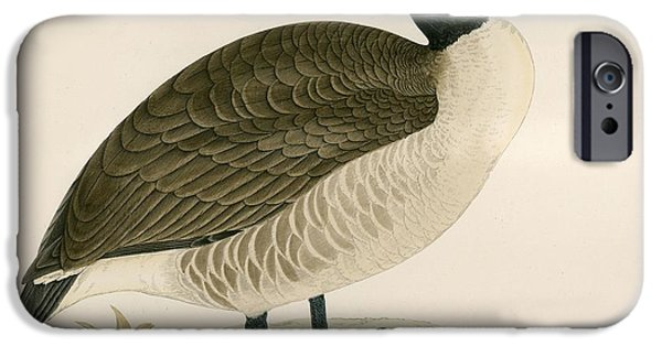Hunting Bird iPhone Cases - Canada Goose iPhone Case by Beverley R. Morris