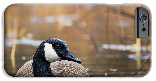 Geese iPhone Cases - Canada Goose Square iPhone Case by Bill  Wakeley