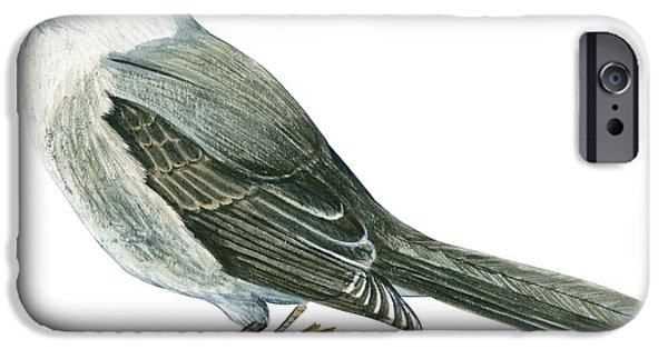 Blue Jay iPhone Cases - Canada jay iPhone Case by Anonymous