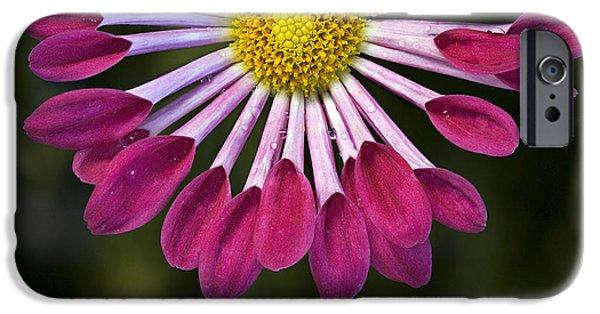 Botanical iPhone Cases - Canada Mum iPhone Case by Susan Candelario