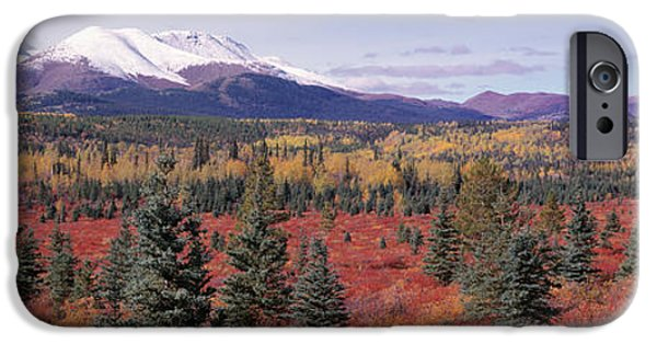 Yukon Territory iPhone Cases - Canada, Yukon Territory, View Of Pines iPhone Case by Panoramic Images