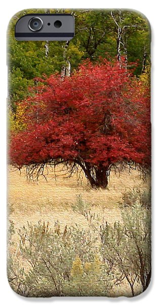 Canadian Autumn iPhone Case by Kathy Bassett
