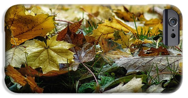 Ground Level iPhone Cases - Canadian Autumn iPhone Case by Mountain Dreams