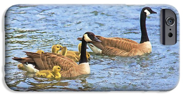 Baby Bird iPhone Cases - Canadian Geese and Goslings Blue waters iPhone Case by Jennie Marie Schell