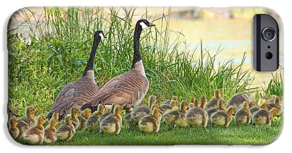 Baby Bird iPhone Cases - Canadian Geese Family iPhone Case by Jennie Marie Schell