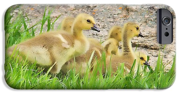 Baby Bird iPhone Cases - Canadian Geese Goslings iPhone Case by Jennie Marie Schell
