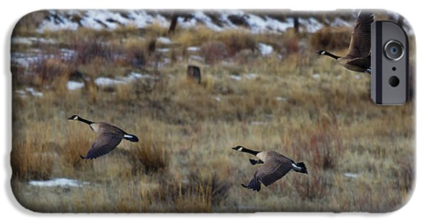 Flight iPhone Cases - Canadian Geese in Flight iPhone Case by Mike  Dawson