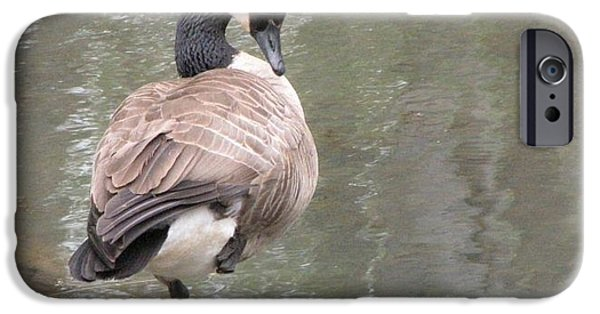One Pyrography iPhone Cases - Canadian Goose On One Leg - Cleveland Metroparks iPhone Case by Lee Neiden