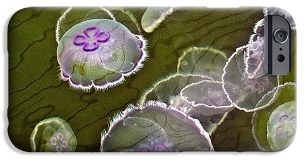 Image Of Jelly Fish iPhone Cases - Canadian Moon Jelly Dance iPhone Case by Artist and Photographer Laura Wrede