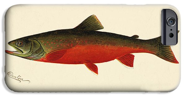 Antiques iPhone Cases - Canadian Red Trout iPhone Case by Gary Grayson