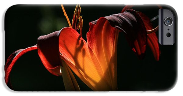 Day Lilies iPhone Cases - Candle in the Wind iPhone Case by Donna Kennedy