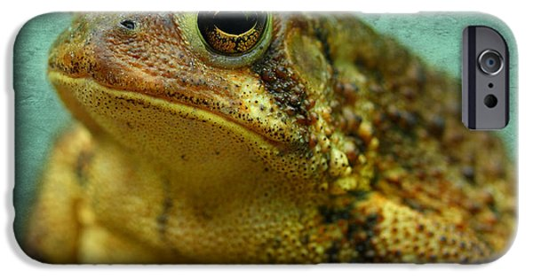 Amphibians Photographs iPhone Cases - Cane Toad iPhone Case by Michael Eingle