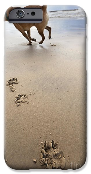 Canine Beach Jogging iPhone Case by Eldad Carin