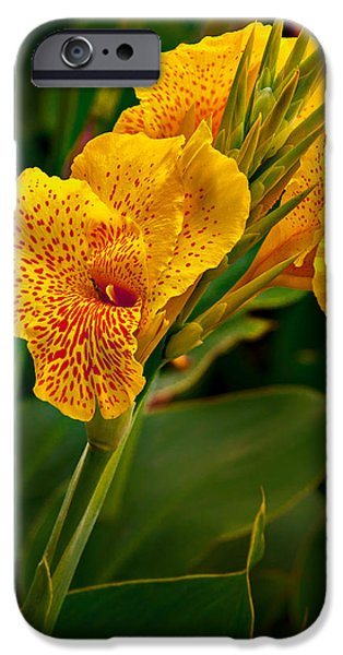 Canna iPhone Cases - Canna Blossom iPhone Case by Mary Jo Allen