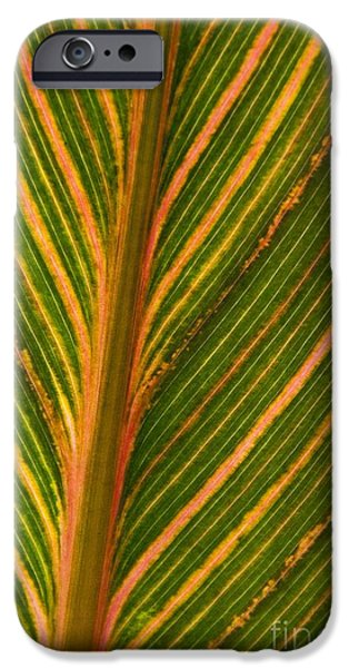 Canna iPhone Cases - Canna durban iPhone Case by Carol Casselden