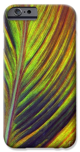 Stripes iPhone Cases - Canna Leaf iPhone Case by Living Color Photography Lorraine Lynch