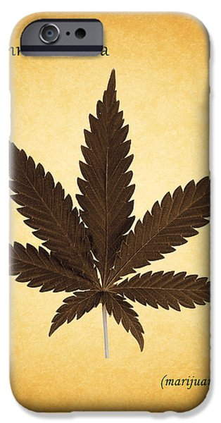 Flora iPhone Cases - Cannabis sativa iPhone Case by Mark Rogan