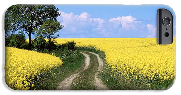 Pathway iPhone Cases - Canola, Farm, Yellow Flowers, Germany iPhone Case by Panoramic Images